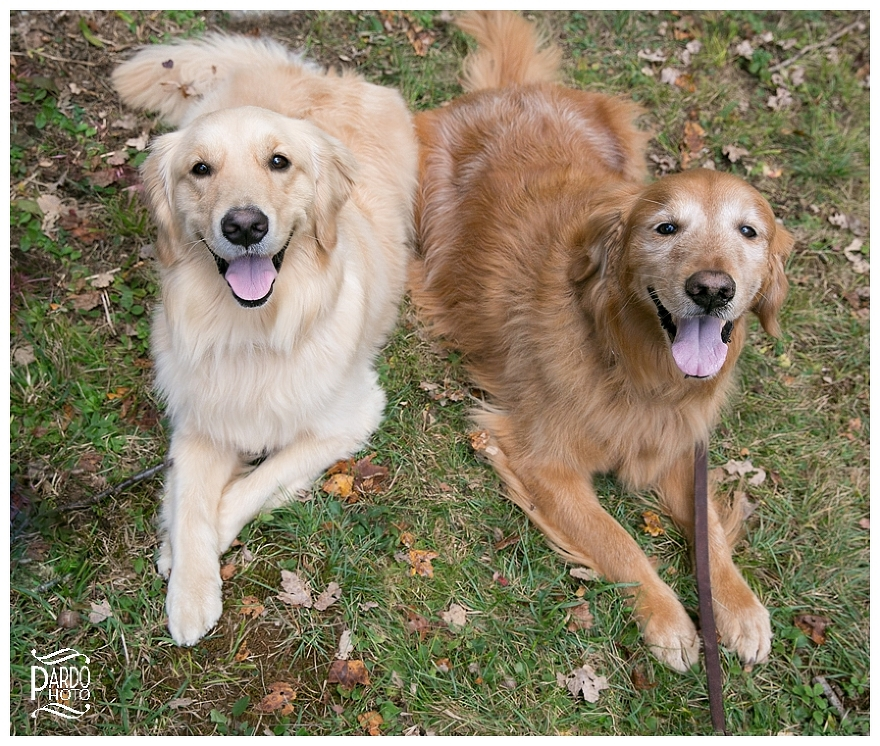 Pets-Family-Sessions-Pardo-Photo_0004